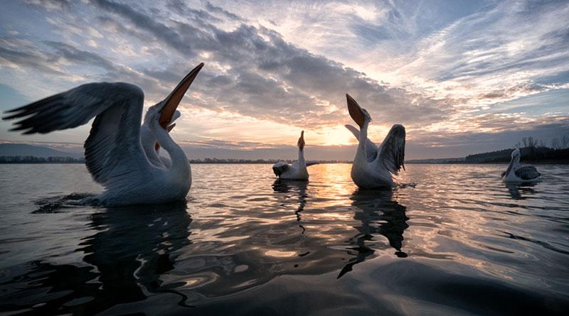 Mostra Simone Sbaraglia A tu per tu con la natura a Cagliari